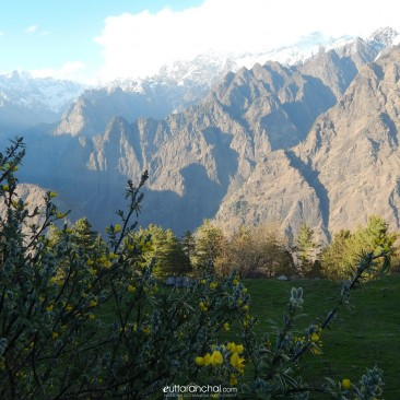 Pristine beauty of nature @ Auli