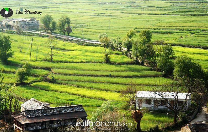 Farming in Pahad