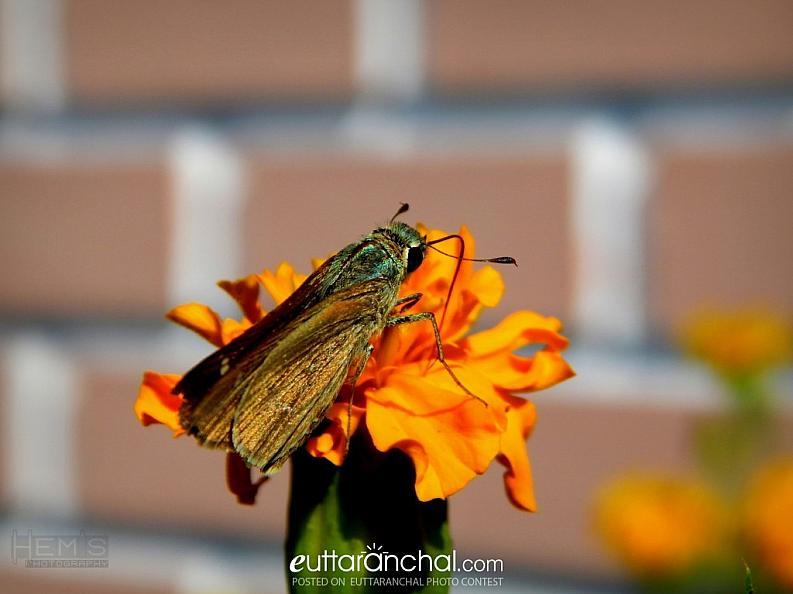 Buttertfly