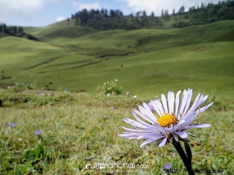 Nurturing nature in Uttarakhand