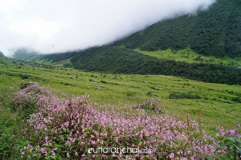 Mist over Valley of flowers
