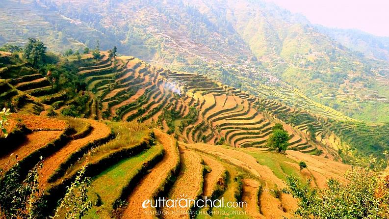 Fields near Pauri