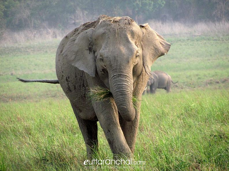 Elephant having a day out in Corbett