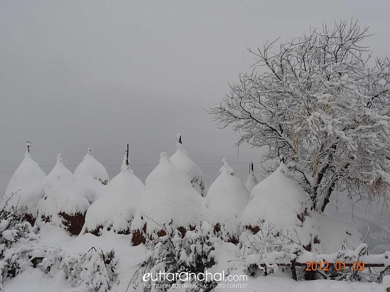 Photo Snow Palkund