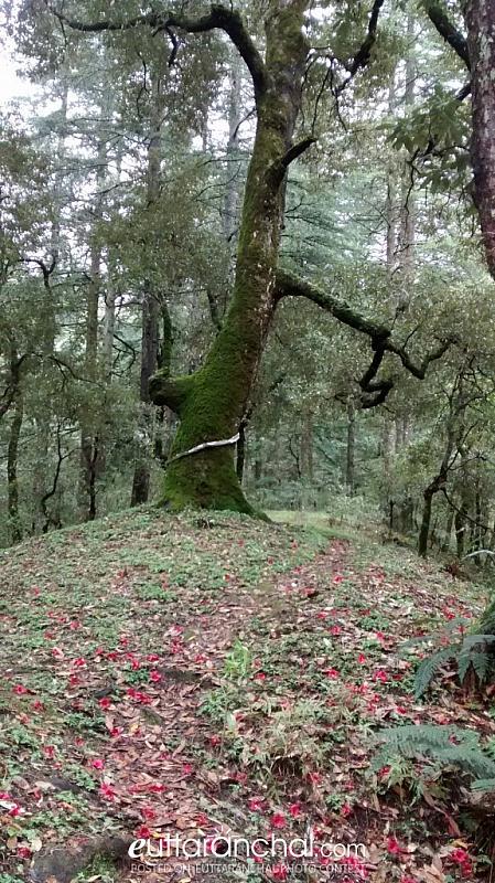 Amazing forest near Tadkeshwar Temple..