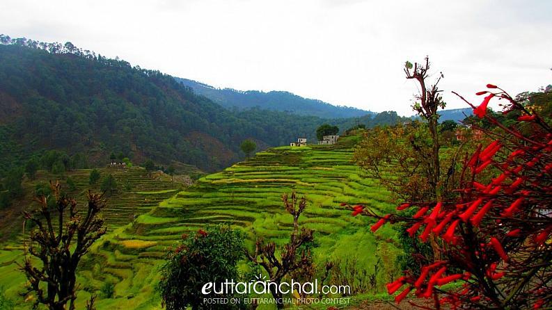 पहाड़ो में सीढ़ीनुमा खेतो का देखने में जो ख़ुशी और आनंद की भूती होती हो, शायद कही और हो!!!