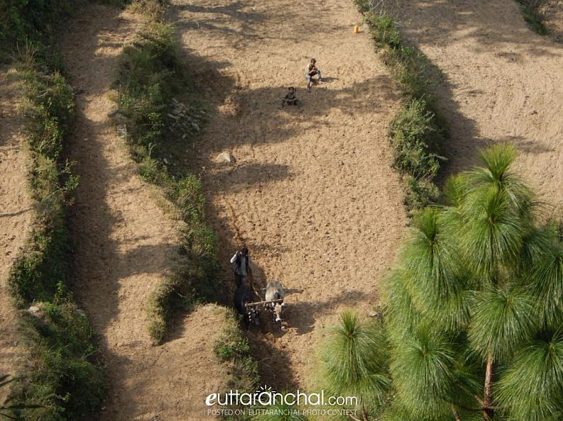 farming in hills