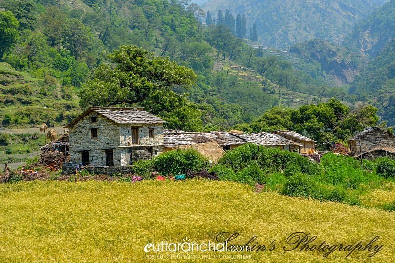 Architecture in Hills