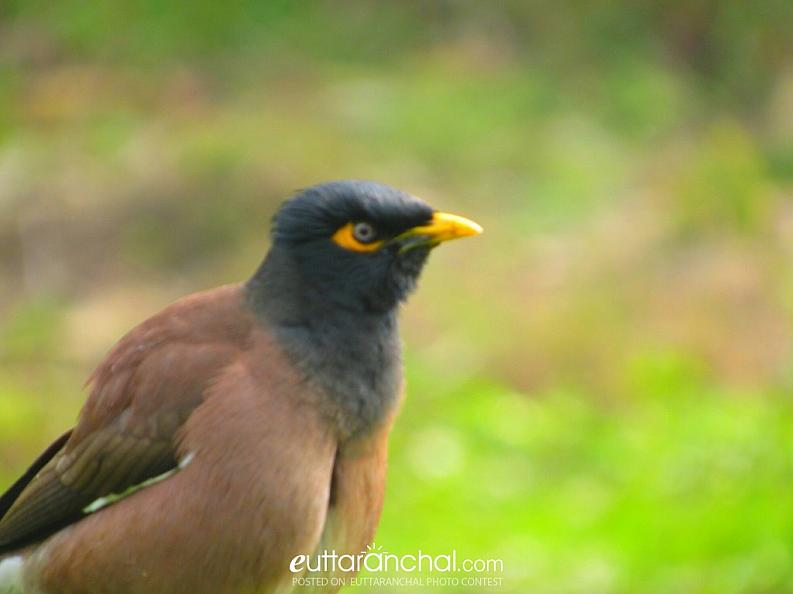 bird is one of the beautiful thing that god made