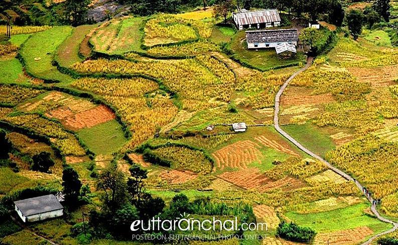 Saari village