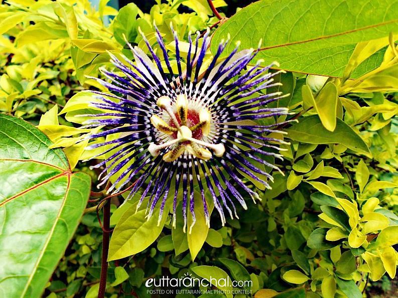 A unique flower