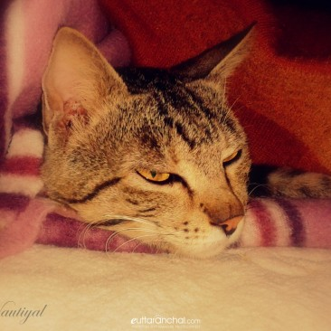 Its very cold…. :(….let me sleep….:)