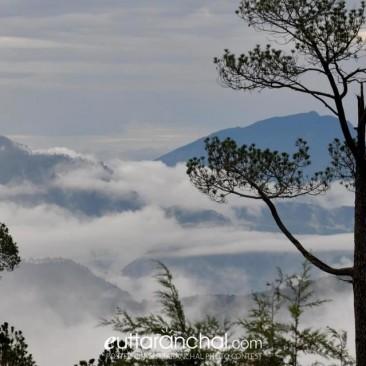 The Mist at Chaukori