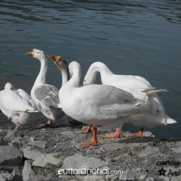 Duck's LoVe :)