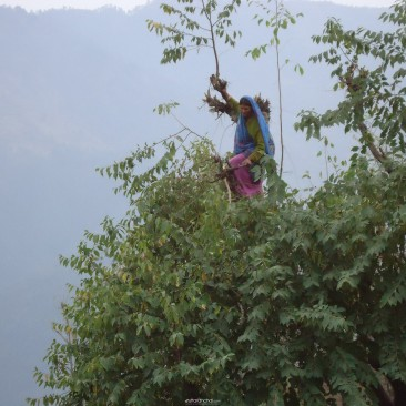 Uttarakhand rural womens daily life