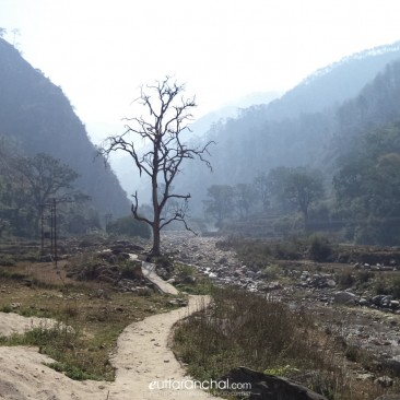 Tree with no leaves like Uttarakhand without lawmaker