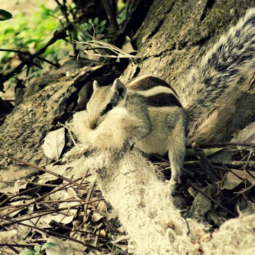 Squirrel taking wool for his child . . going to birth. .