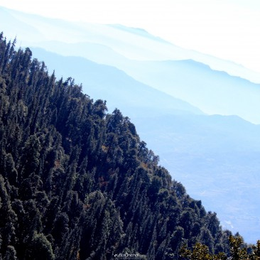 Himalayan subalpine conifer forest
