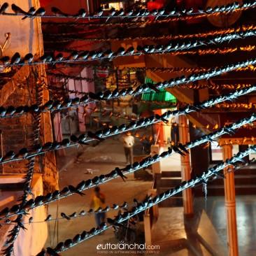Thousand of birds (Ghautyali)