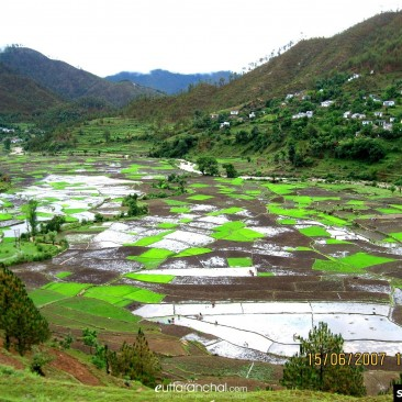Paddy fields in Kumaon Village