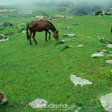 Rainy pasture