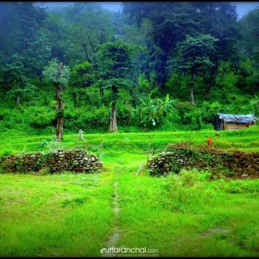 देवभूमि उत्तराखंड की प्राकतिक खूबसूरती हर गाँव में देखने को मिलती है