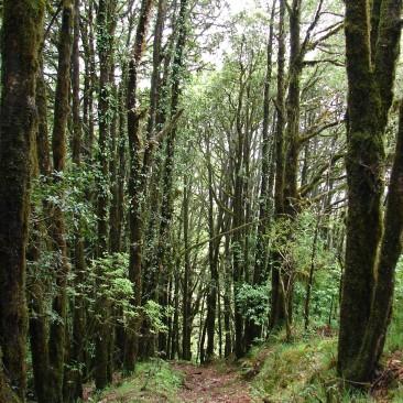 Saklana Forest