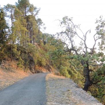 Road to KVMN (Binsar Wildlife Sanctuary)