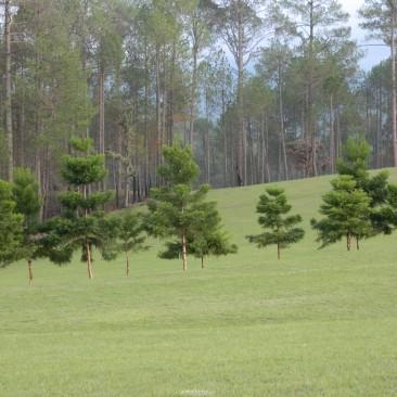 Green Cover @ Golf Course