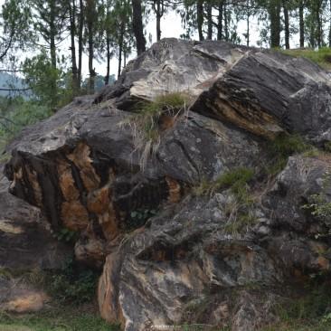 the sturdy rock