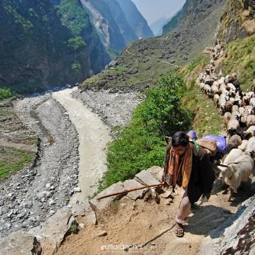 Way to Milam Glacier