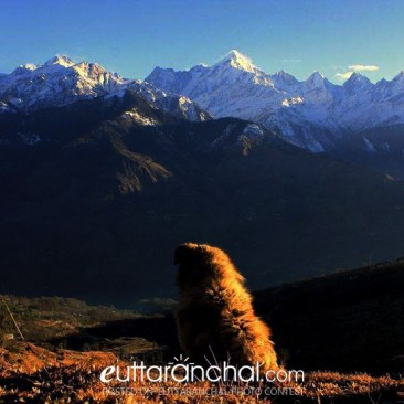 Dog with Mount panchachuli peaks.