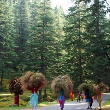 Hard working pahadi ladys..