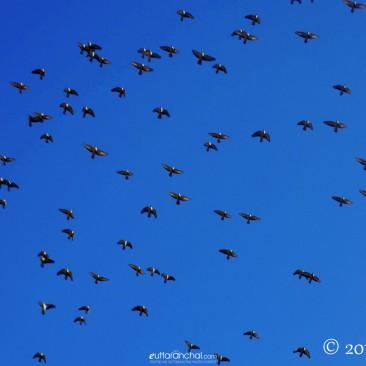 Flight across the deep blue