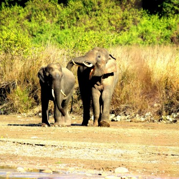 wildlife in rajaji national park