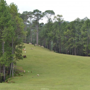 Gold Ground at Ranikhet