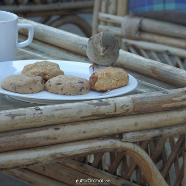 Tea Time Rendevous